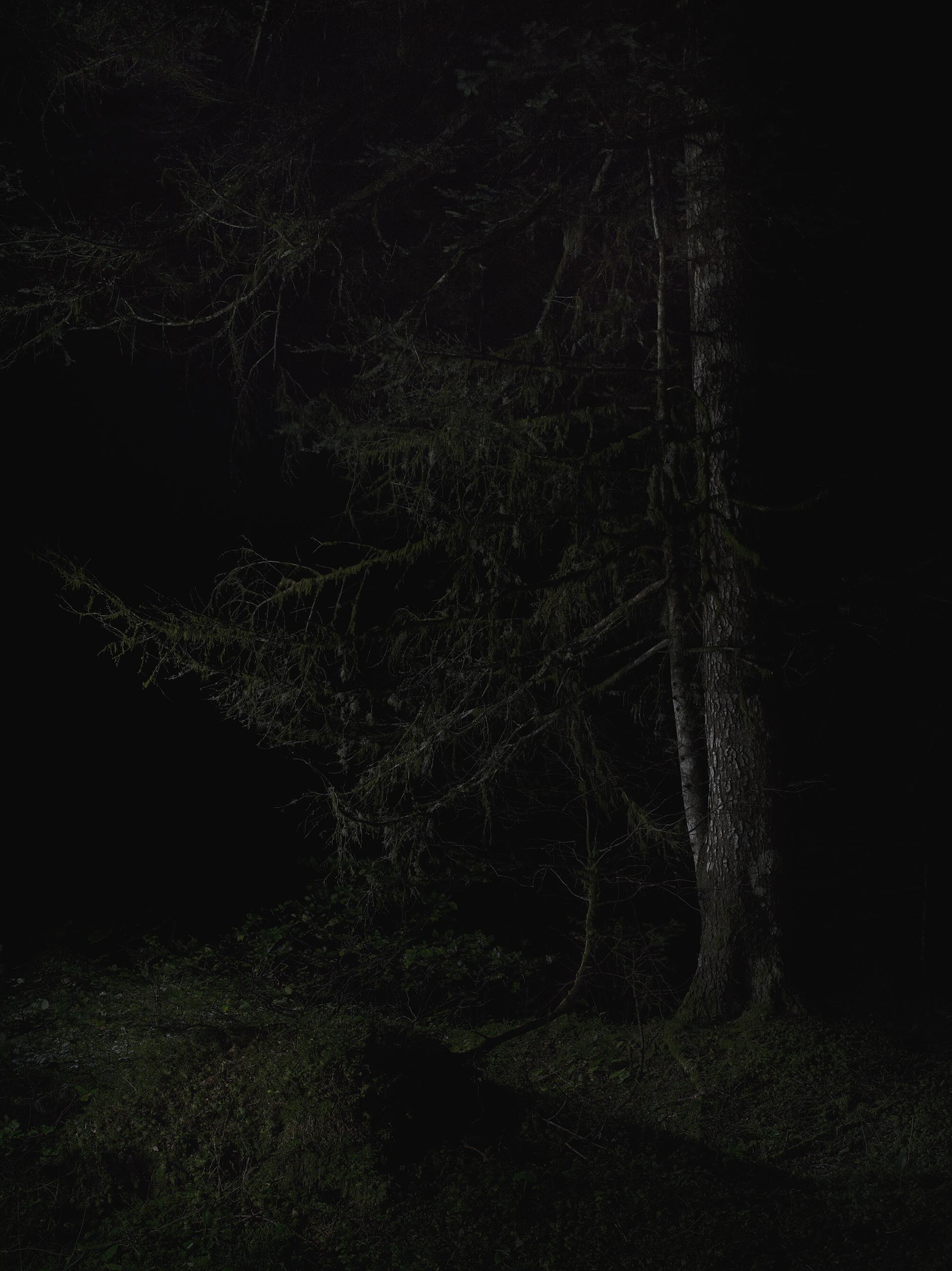 01a_FOREST_03