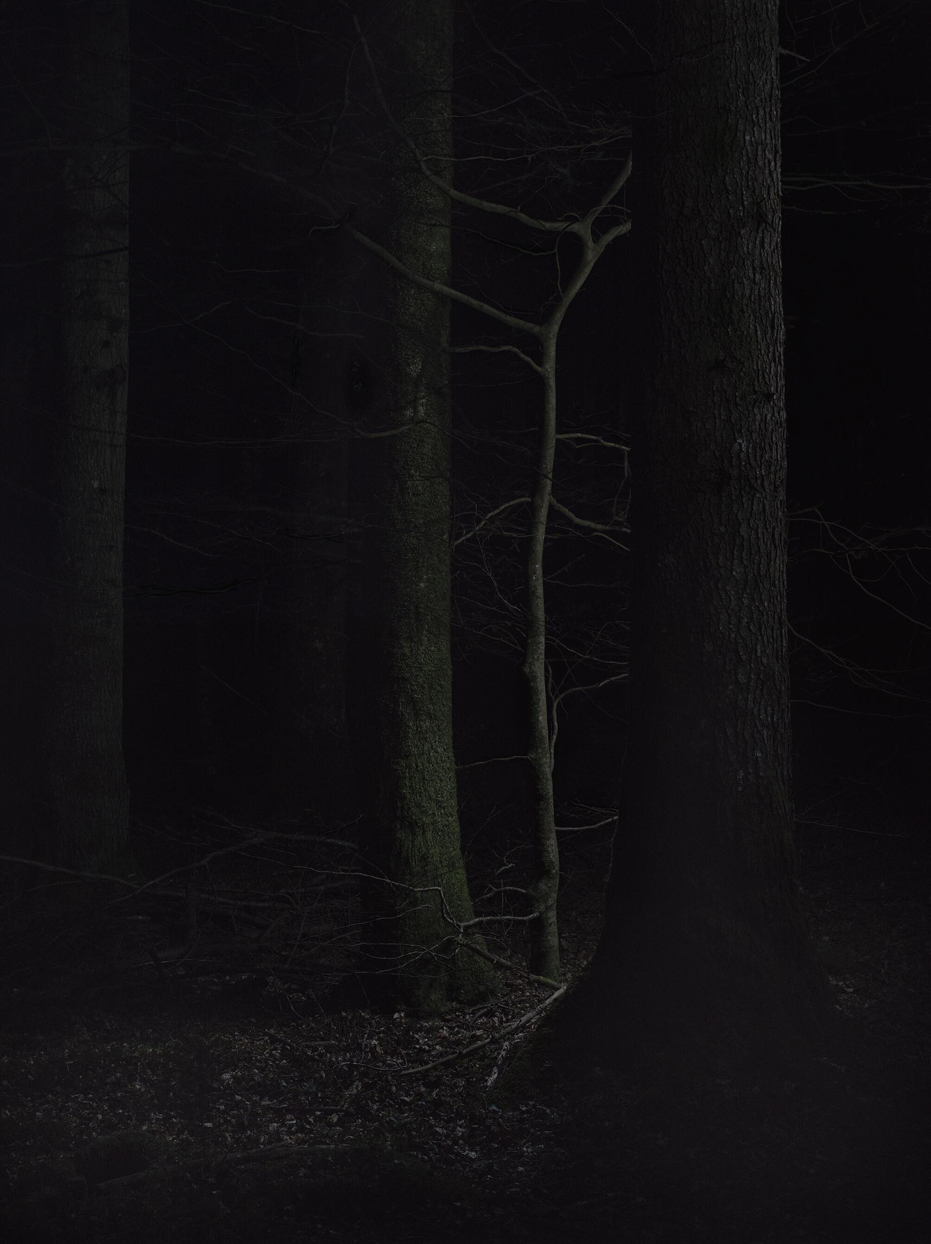 01b_FOREST_07