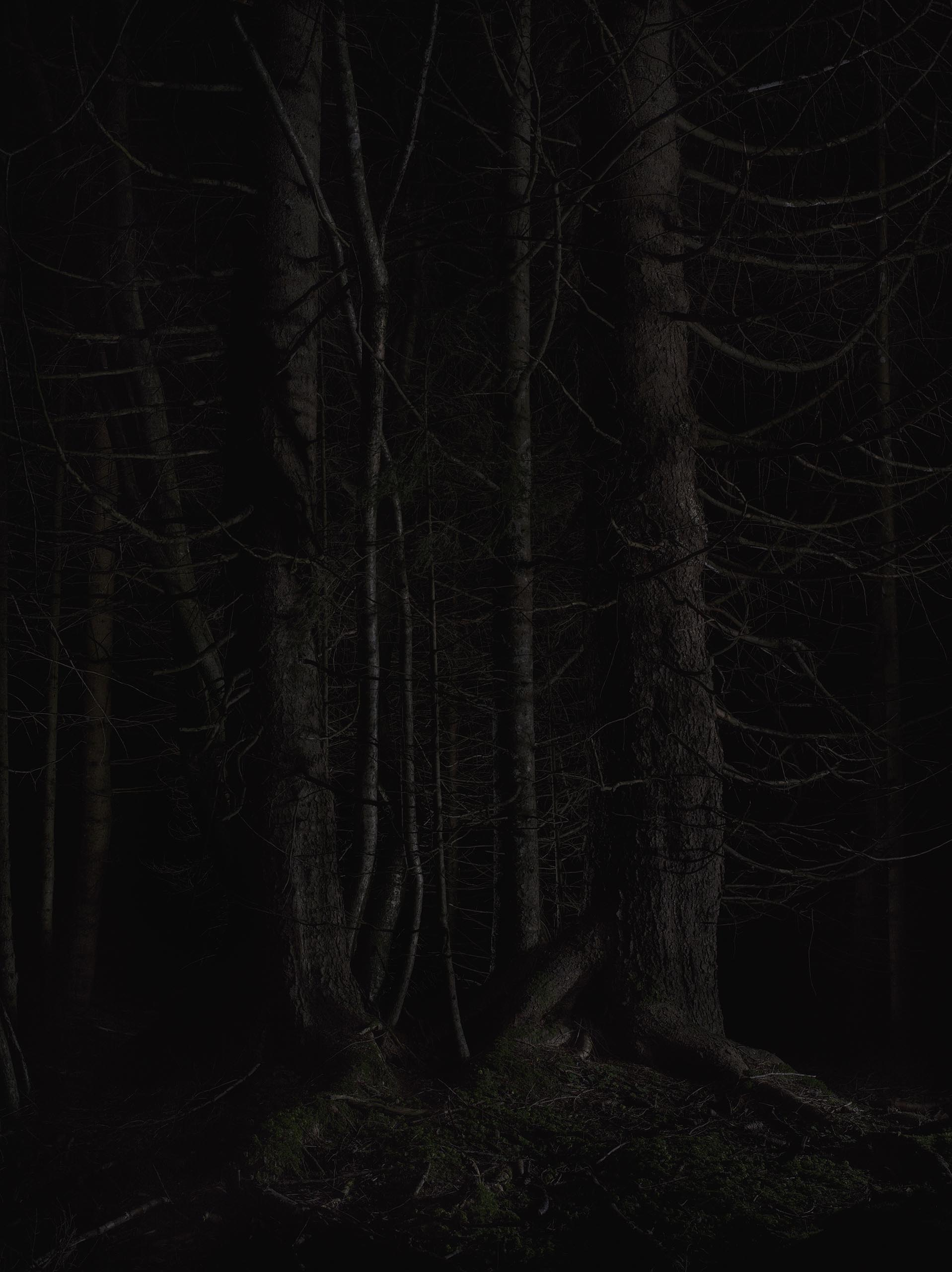 02_FOREST_08