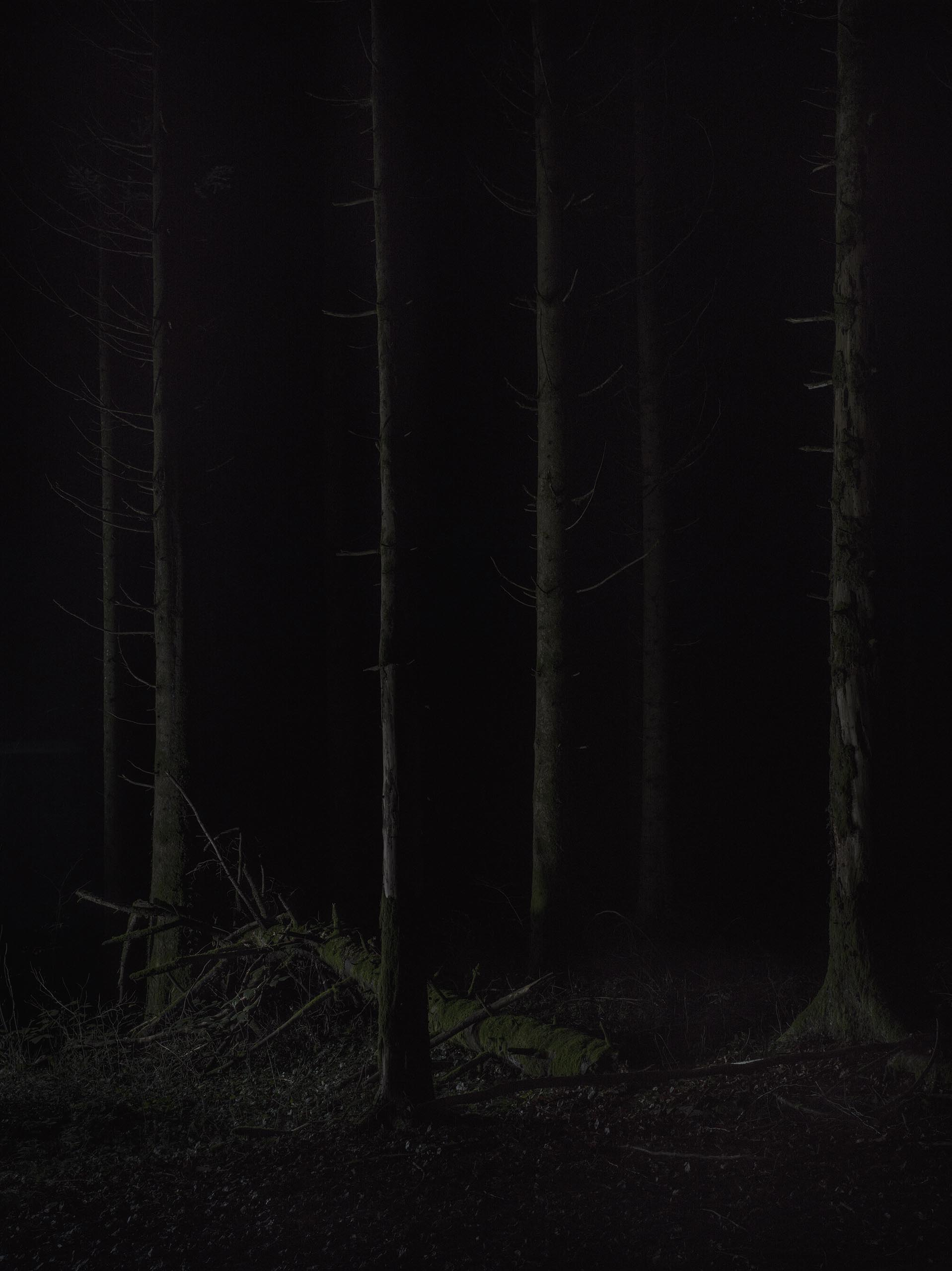 03_FOREST_09