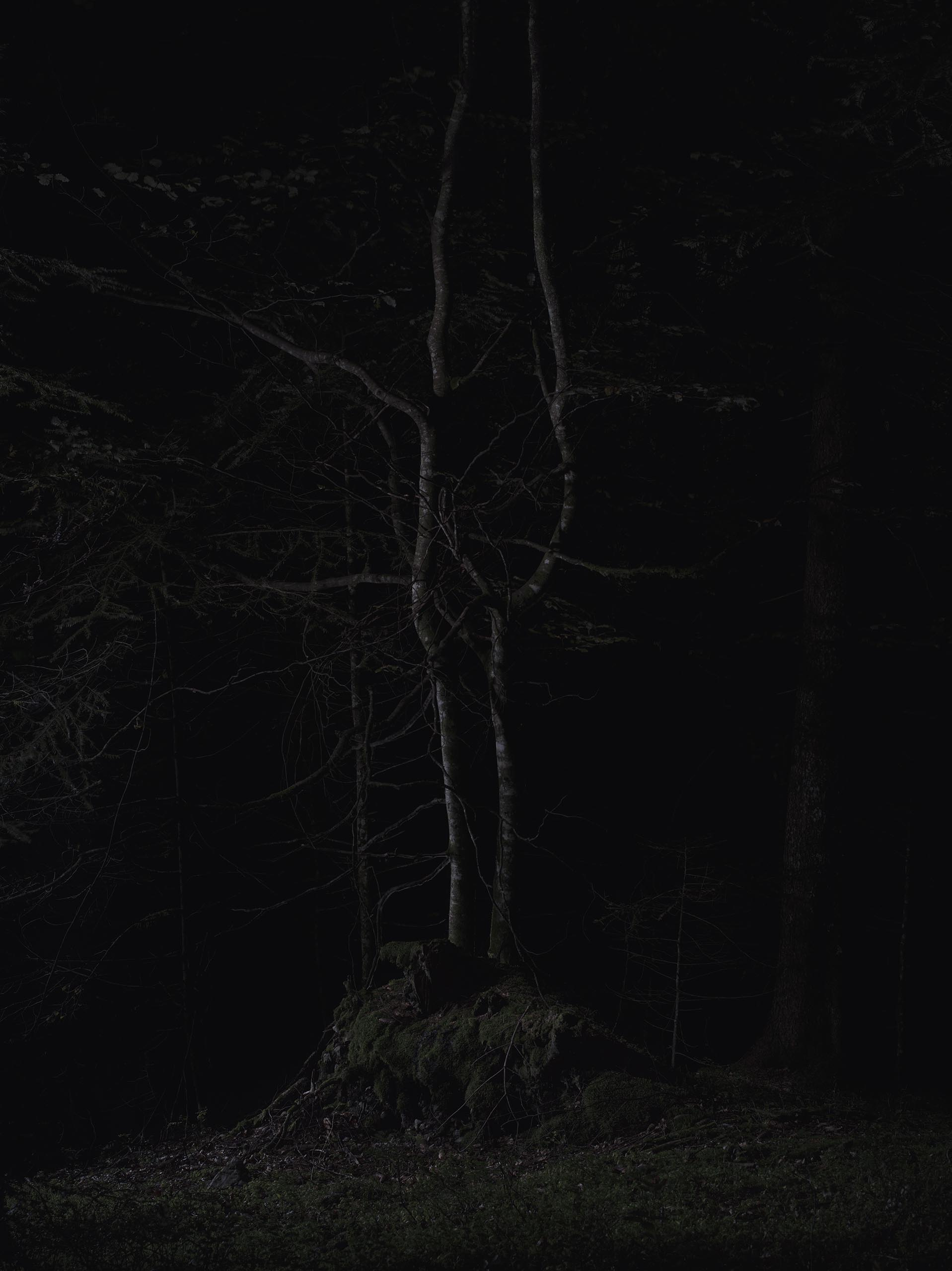 06b_FOREST_02