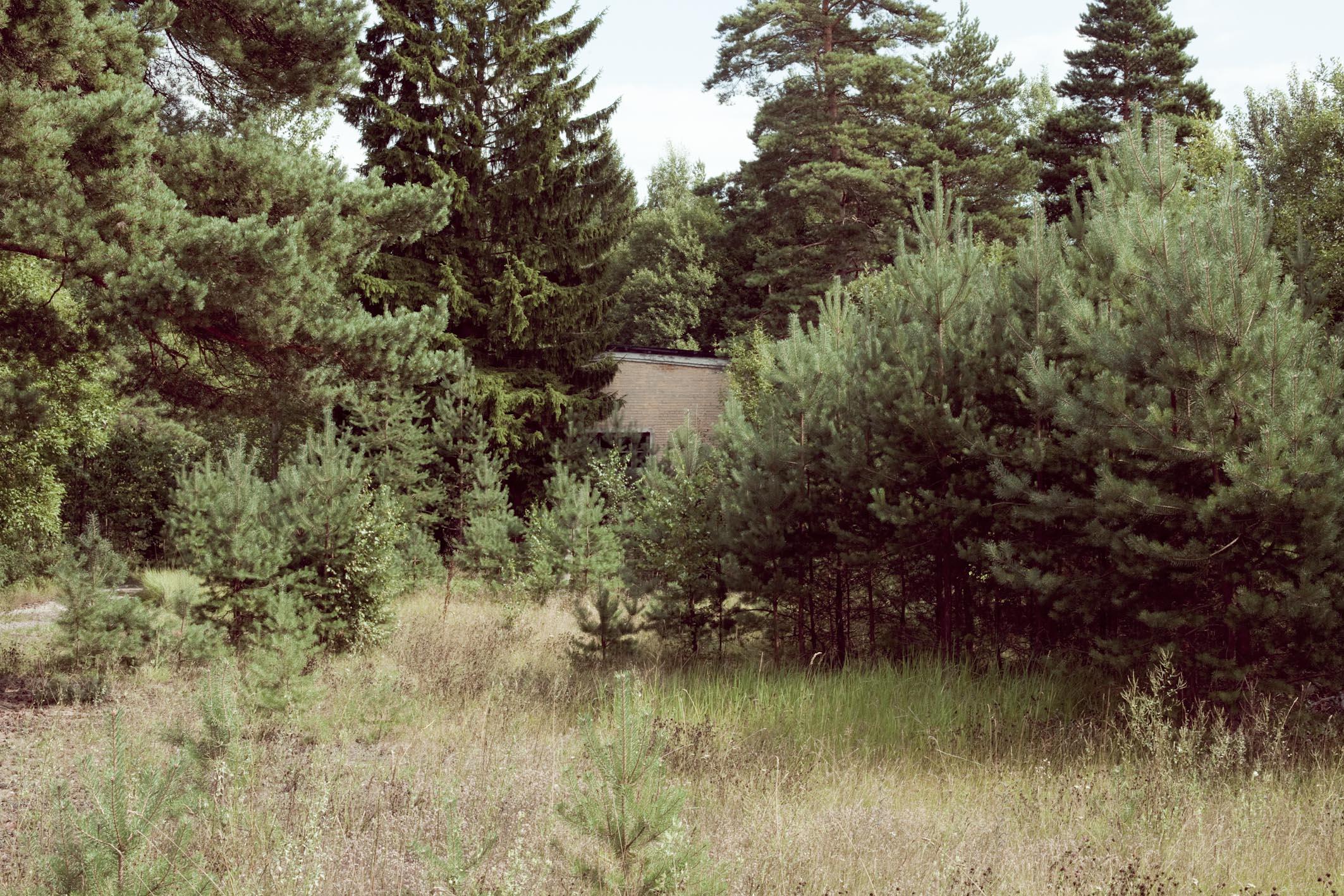 Forêt, bois du Jorat