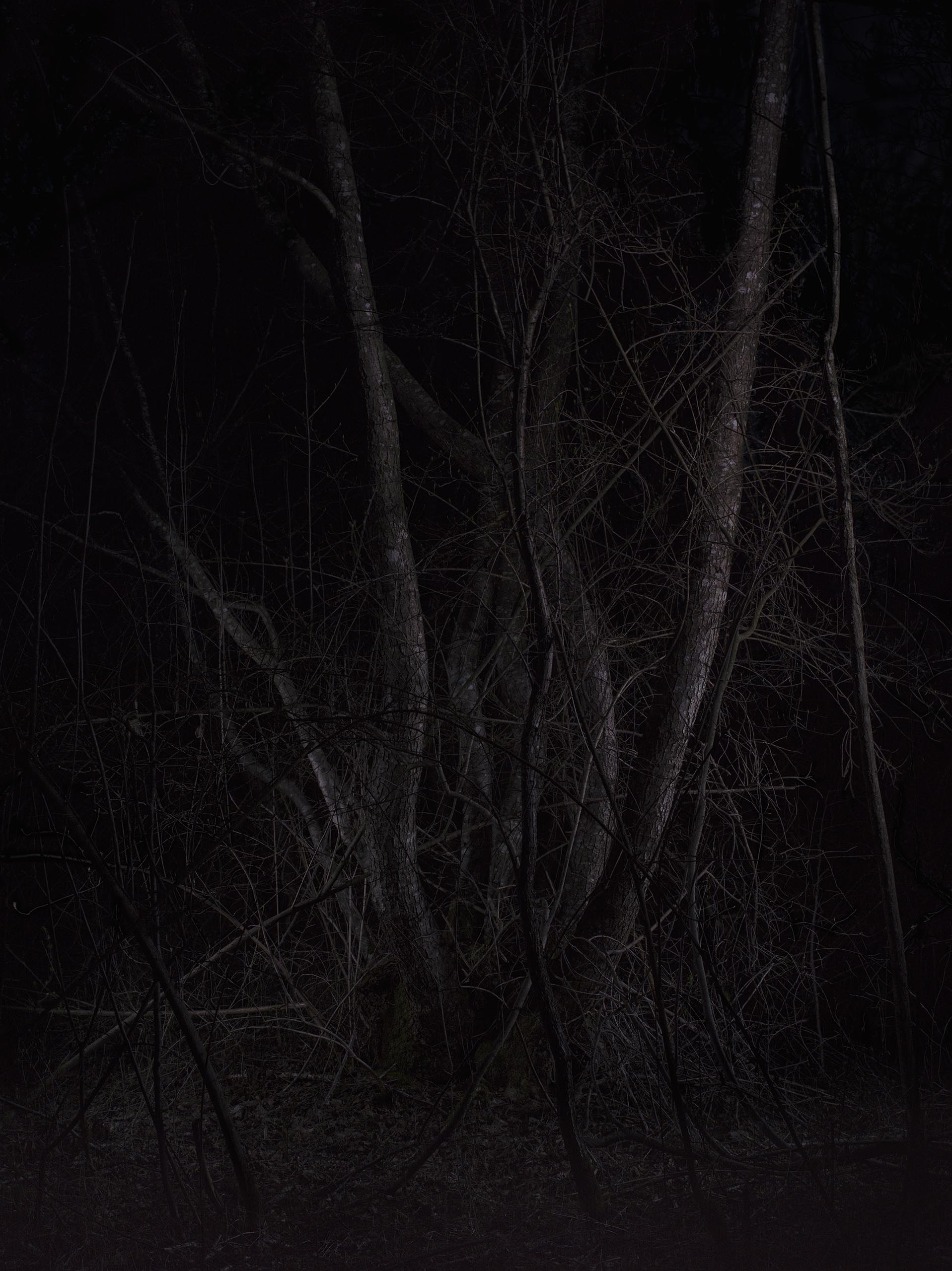 13b_FOREST_10