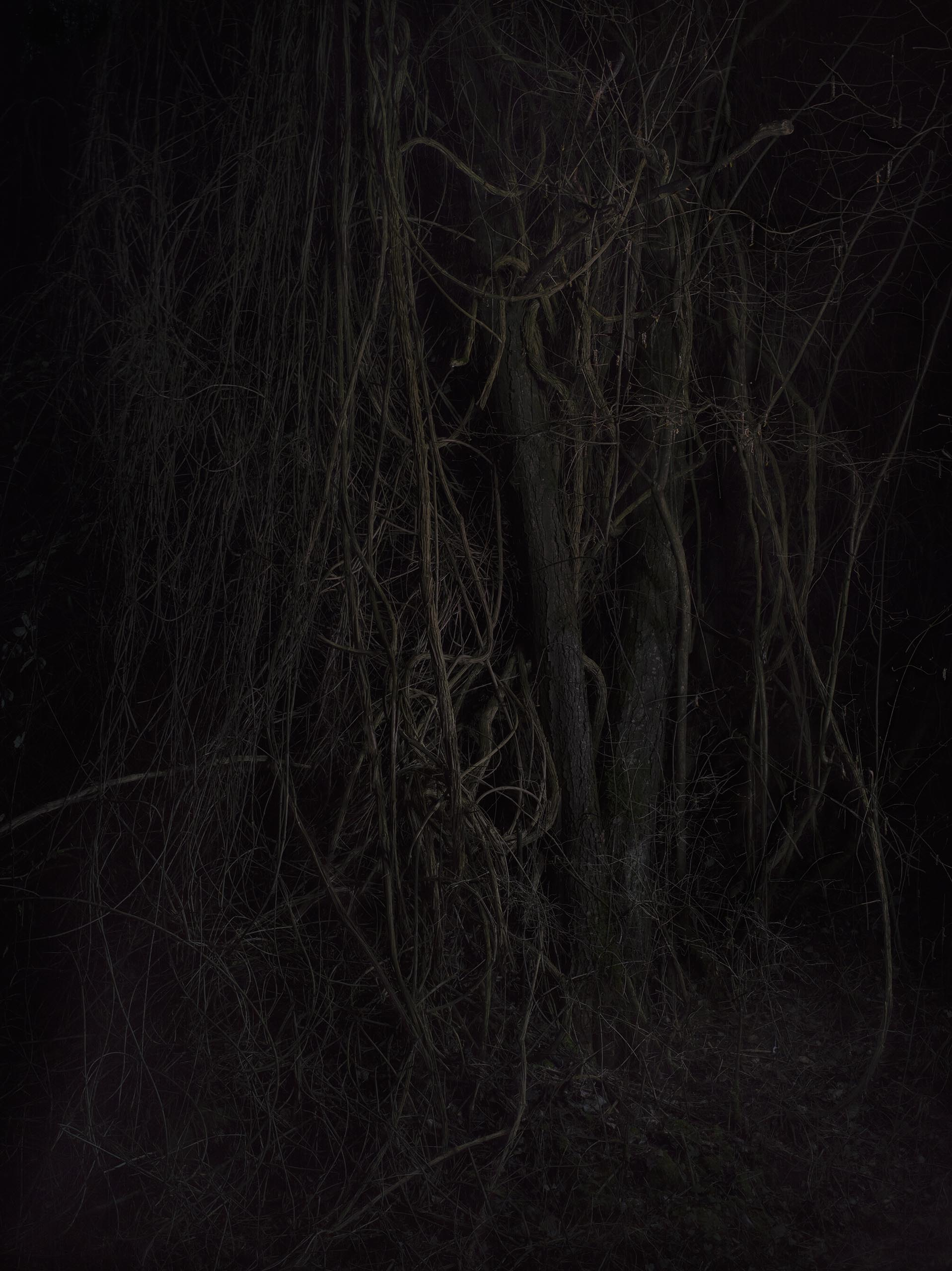 13c_FOREST_12